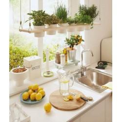 Φυτά στην κουζίνα σου! Οι  πιο δημιουργικοί τρόποι να τα προσθέσεις!